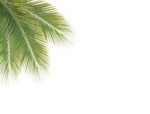 绿色椰子叶子框架 库存照片