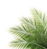 绿色椰子叶子框架 免版税库存图片