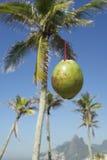 绿色椰子落的Ipanema海滩里约巴西 免版税库存图片