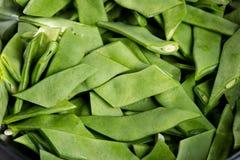 绿色椰树豆 库存图片