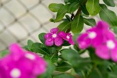 绿色概念、美丽的花和装饰 库存图片