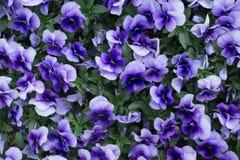 绿色概念、美丽的花和装饰 免版税图库摄影