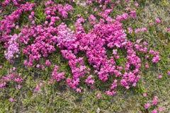 绿色概念、美丽的花和装饰 图库摄影
