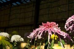 绿色概念、美丽的花和装饰 库存照片