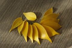 黄色榕属叶子 免版税库存图片