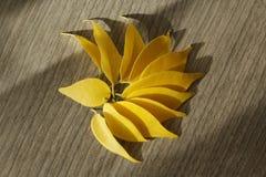 黄色榕属叶子 免版税库存照片