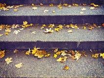 黄色槭树在秋天的楼梯步离开 免版税库存照片