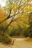 黄色槭树秋叶 免版税图库摄影