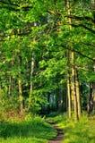 绿色横向春天 库存照片