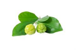 绿色樱桃 免版税库存图片