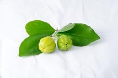 绿色樱桃 免版税图库摄影