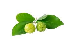绿色樱桃 库存图片
