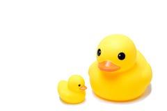 黄色橡胶鸭子玩具在孤立白色背景中 库存图片