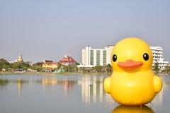 黄色橡胶鸭子 免版税库存照片