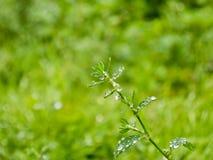 绿色毒菌 库存照片