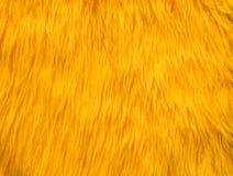 黄色毛皮摘要纹理 图库摄影