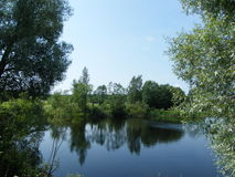 绿色池塘 库存照片