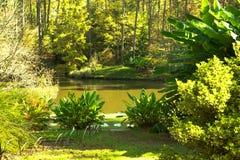 绿色池塘 库存图片