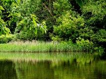 绿色池塘 免版税库存照片