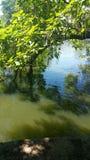 绿色池塘 免版税库存图片