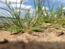绿色沙子海 库存照片