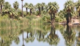 绿色沙漠绿洲 免版税库存照片