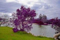 紫色河岸 库存照片