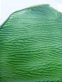 绿色油漆干有趣,复杂样式 库存图片