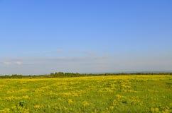 黄色油菜籽草甸 库存图片