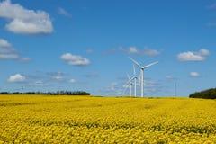 黄色油菜籽领域在一朵蓝天和白色云彩下 免版税库存图片