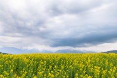 黄色油菜籽领域在有一座多云山的国家在t 库存图片