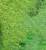 绿色泡沫背景 库存图片