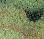 绿色泡沫背景 免版税库存图片