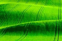 绿色波浪小山在南摩拉维亚 免版税库存照片