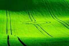 绿色波浪小山在南摩拉维亚 库存照片