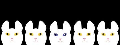 黄色注视白色猫和一只蓝眼睛的白色猫 免版税库存图片