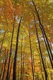 黄色海在秋天的 免版税库存照片
