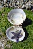 紫色海星 图库摄影