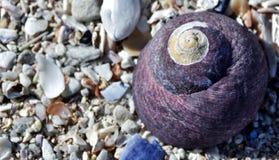 紫色海洋蜗牛房子 库存图片