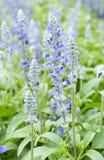 紫色淡紫色花 图库摄影
