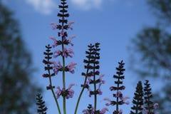 紫色淡紫色 库存照片