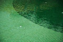 绿色游泳池的马赛克  库存照片