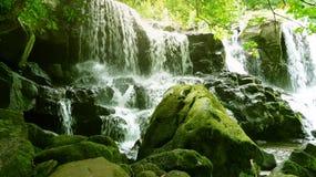 绿色瀑布绿洲 库存图片