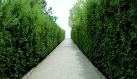 绿色灌木和一条狭窄的道路 库存图片