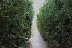 绿色灌木和一条狭窄的道路 免版税库存照片