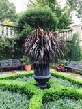 绿色灌木和树在庭院里 库存图片