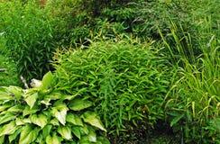 绿色灌木和草本背景 免版税库存图片