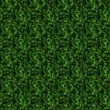 绿色灌木无缝的样式 免版税库存图片