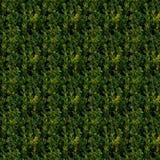 绿色灌木无缝的样式 免版税库存照片