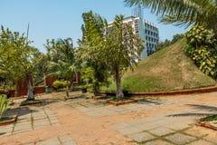 绿色灌木,植物在庭院里,金奈,印度, 2017年4月01日 库存图片